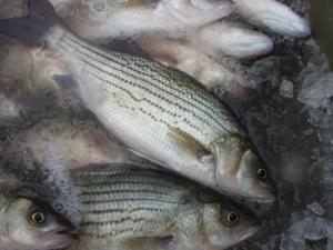 Cover photo for 2018 North Carolina Aquaculture Development Conference