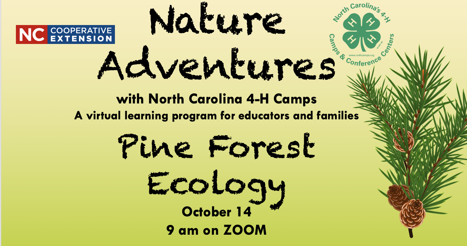 Pine Forest Ecology