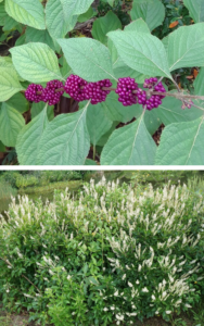 Cover photo for Native Plants for Coastal Landscapes: NEW Video Series